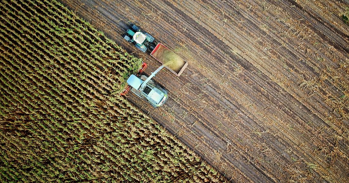 Agricultura/Florestas